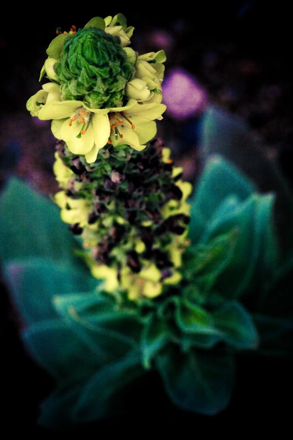 Professional Botanical Photographer