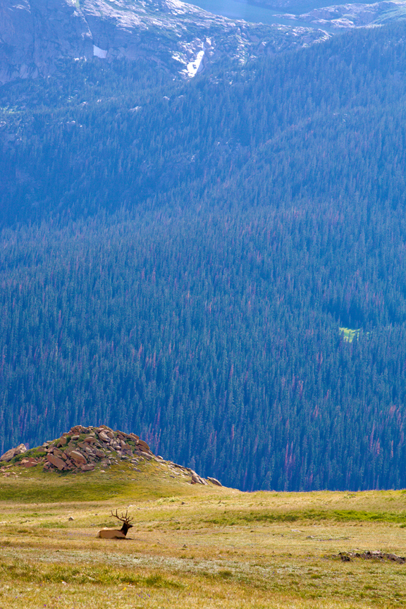 Rocky Mountain Professional Photography