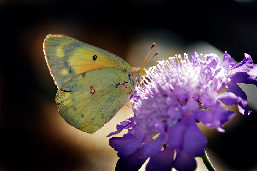 Butterfly Photographer