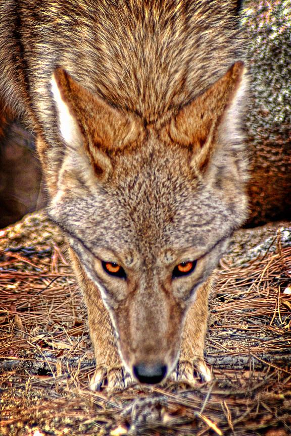 Arizona Nature Photographer